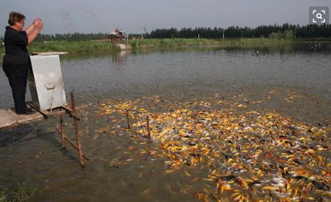水产养殖行业消毒杀菌专用臭氧气体传感器模块-水产加工杀菌臭氧模块-养殖灭菌气体臭氧浓度检测模块