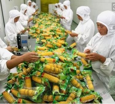 食品加工行业消毒专用臭氧气体传感器模组品牌-工业级食品灭菌臭氧检测模块-食品加工臭氧浓度检测模块最新报价